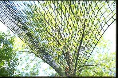 tree net abstract art installation photograph mike smith
